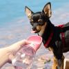 Flasica za vodu sa posudom za pse